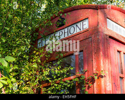 Dilapidated old telephone kiosk partly overgrown by a hedge. - Stock Photo
