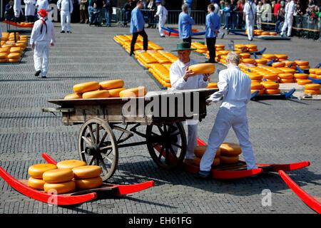 Men loading cheese rounds onto cart, Alkmaar Cheese Market, Netherlands - Stock Photo