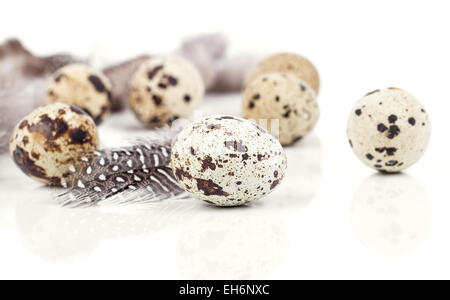 quail eggs with feather on white background - Stock Photo