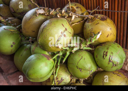 A Pile of green coconuts, at a restaurant in Phu quoc, Vietnam - Stock Photo