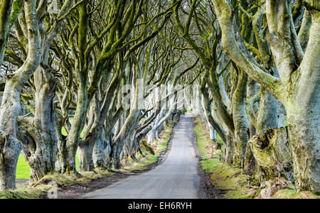 The Dark Hedges at Stranocum, location for a number of scenes in Game of Thrones.