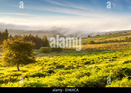 Dartmoor National Park, Holwell, Devon, England, United Kingdom, Europe - Stock Photo