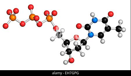 Thymidine triphosphate molecule - Stock Photo