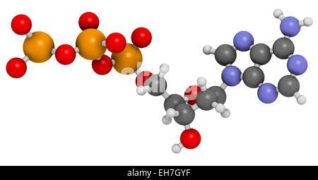 Deoxyadenosine triphosphate molecule - Stock Photo