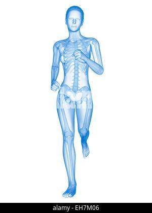 Skeletal system of a runner, illustration - Stock Photo