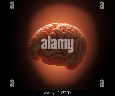 Human brain, illustration - Stock Photo