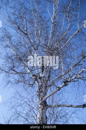 birdhouse on a birch tree in spring - Stock Photo