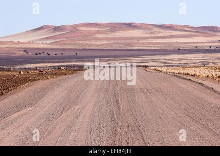 Pad D707, road along the Namib Desert, Namib Naukluft Park, Namibia - Stock Photo