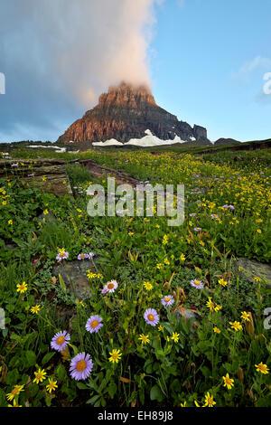 Alpine meadow, Glacier National Park, Montana, United States of America, North America - Stock Photo