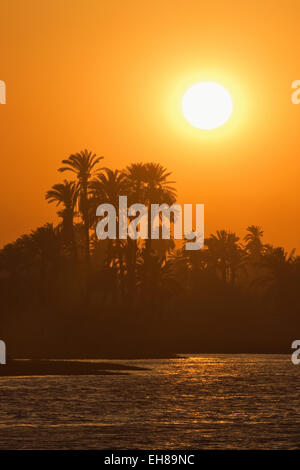 Sunset over palm trees on the banks of the River Nile, Egypt, North Africa, Africa - Stock Photo