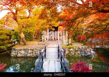 Fall foliage in Kyoto, Japan. - Stock Photo