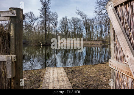 Duck decoy structure used for catching wild ducks showing pond and reed screens - Stock Photo