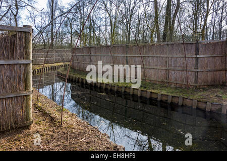 Duck decoy structure used for catching wild ducks showing pipe formed by hoops with netting flanked by reed screens - Stock Photo