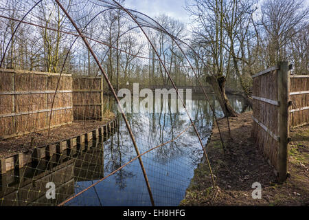 Duck decoy structure used for catching wild ducks showing pond and beginning of pipe formed by hoops with netting - Stock Photo