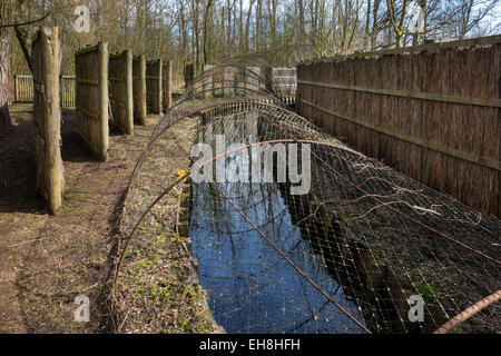 Duck decoy structure used for catching wild ducks showing pipe formed by hoops with netting flanked by screens - Stock Photo