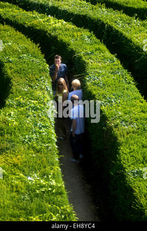 group of people lost in a hedge maze - Stock Photo