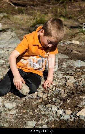 Seven year old boy searching for insects by turning over rocks, in Olallie State Park,  North Bend, Washington, - Stock Photo