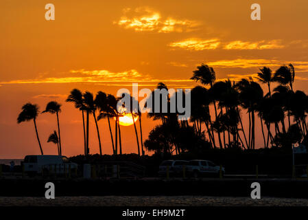 Orange Sky Sunset Big Island Hawaii Kailua Kona Pier Downtown Palm Palm Trees Palmtrees Silhouetes Travel Tropical - Stock Photo