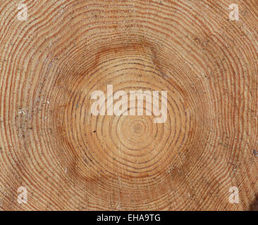 Pine Tree rings. Sawn tree trunk pattern - Stock Photo