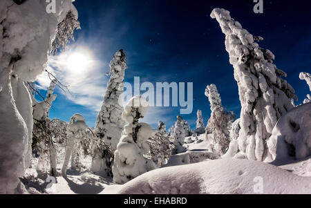 Heavy snow on spruce trees in Riisitunturi National Park. - Stock Photo