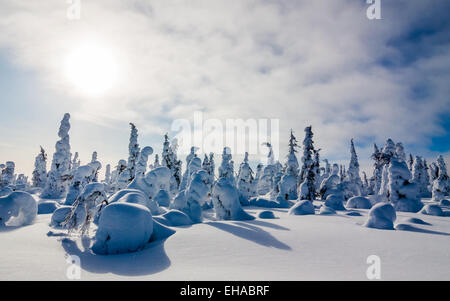 A snow covered forest in Finnish Lapland - Stock Photo