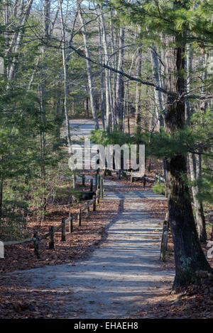 trail in the woods - Stock Photo