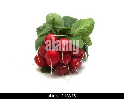 Radieschen pflanzen