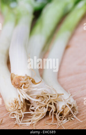 green spring onions on wooden background - Stock Photo