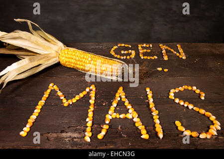 Corn cob with the lettering 'Gen Mais', German for 'genetically modified maize', lettering made of grains of maize - Stock Photo