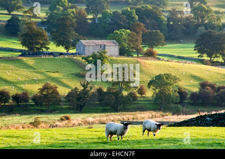 Rolling Countryside, Near Worton, Wensleydale, Yorkshire Dales National Park, Yorkshire, England, UK - Stock Photo