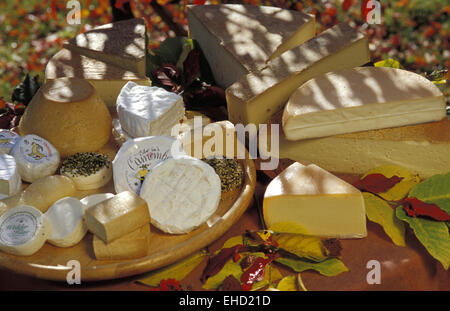 diverse types of cheese - Stock Photo