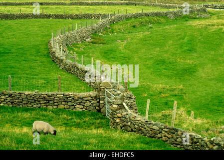 Stone fence in Connamara National Park, Ireland - Stock Photo