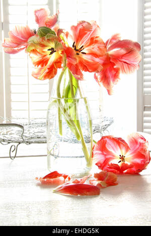 Beautiful tulips in old milk bottle - Stock Photo