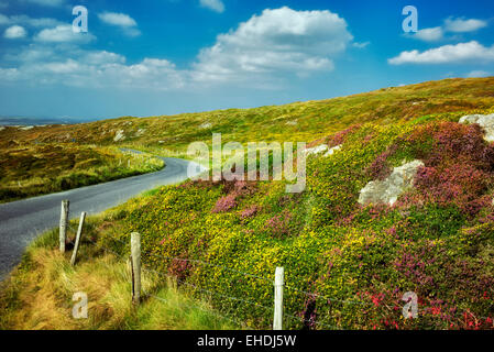 Road and fence with wildflowers. Sky Loop Road. Clifden, Ireland - Stock Photo