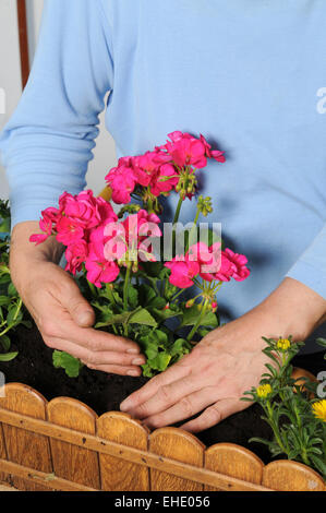 Planting a flower box - Stock Photo