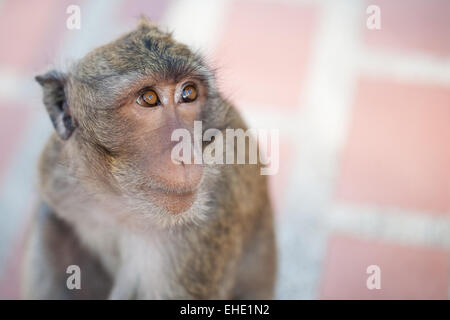 Sad Monkey - Stock Photo