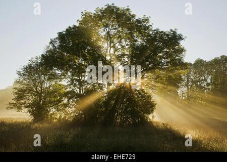sun rays, Jura, Franche Comte, France