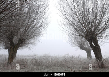 Pasture trees in the winter - Stock Photo