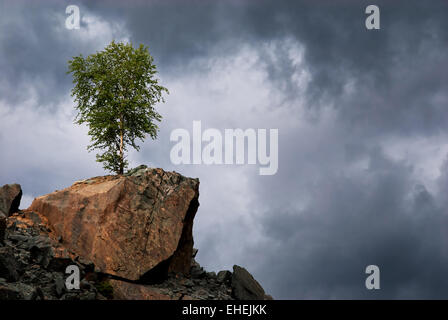 Lonely birch on a rock - Stock Photo