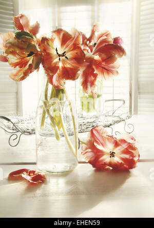 Fresh spring tulips in old milk bottle - Stock Photo