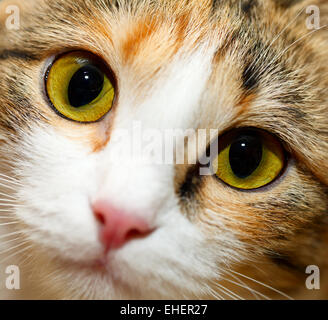 Cat eyes. - Stock Photo