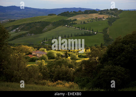 cypress allee near La Foce, Tuscany, Italy - Stock Photo