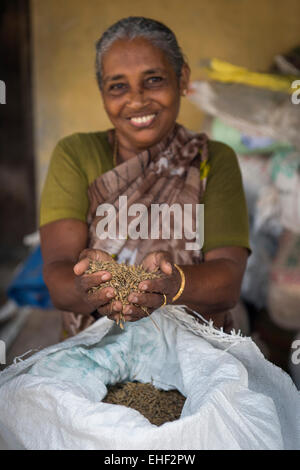 Woman holding Pokkali rice in her hands, backwaters, Ernakulam District, Kerala, India - Stock Photo
