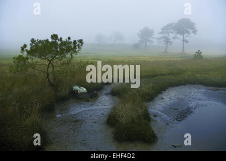protected landscape area, Bretagne, France - Stock Photo