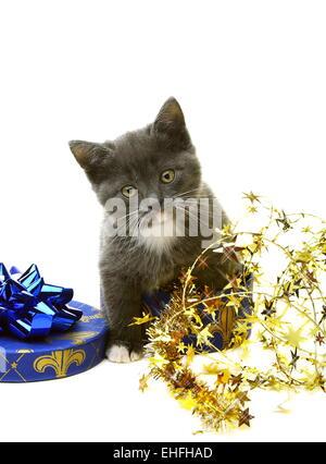 Little gray kitten in a gift box. - Stock Photo