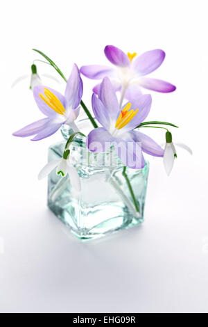 Galanthus nivalis and Crocus - Snowdrops and crocuses in vase on white background - Stock Photo
