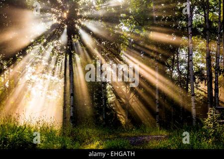 Morning light filters through the forest near Bragg Creek, Alberta - Stock Photo