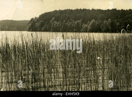 Germany. 11th Mar, 2015. CIRCA 1960s:view of the lake, the shores of which are overgrown with reeds © Igor Golovniov/ZUMA - Stock Photo