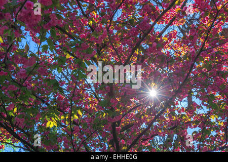 beauty sakura twig close up - Stock Photo