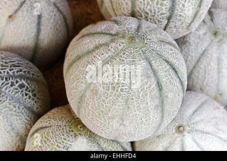 Galia melon, Cucumis melo